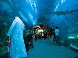 Dubai Aquarium,Underwater Zoo
