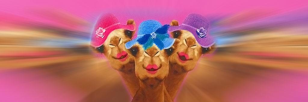 camels 1_header